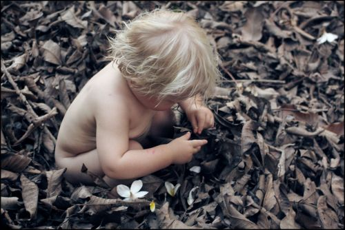 boy, toddler, leaves, fallen, leaf, blonde, explore, exploration